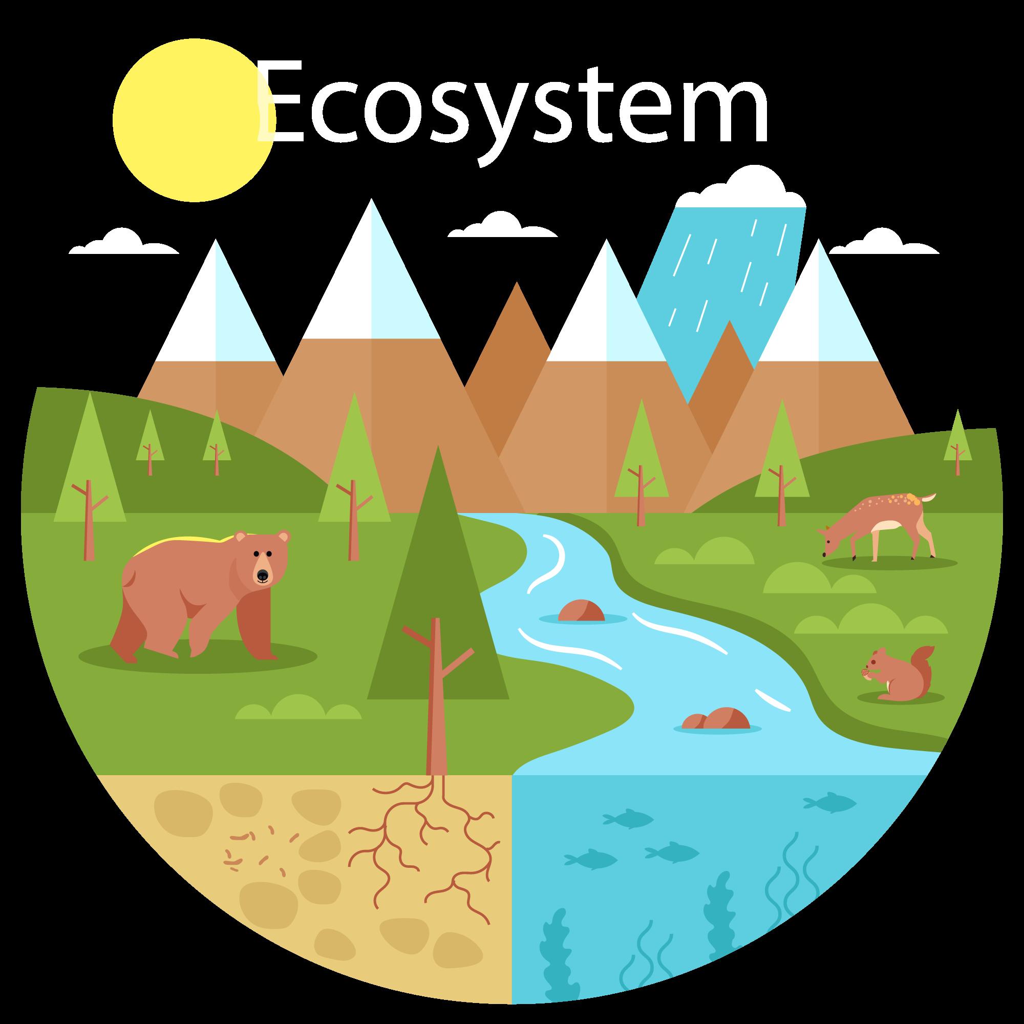 Un alt modul al educatiei ecologice, invata copiii despre ecosistem.